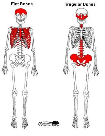 irregular_flat_bones.jpg